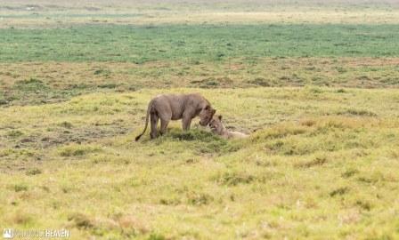 Kenya - 0364