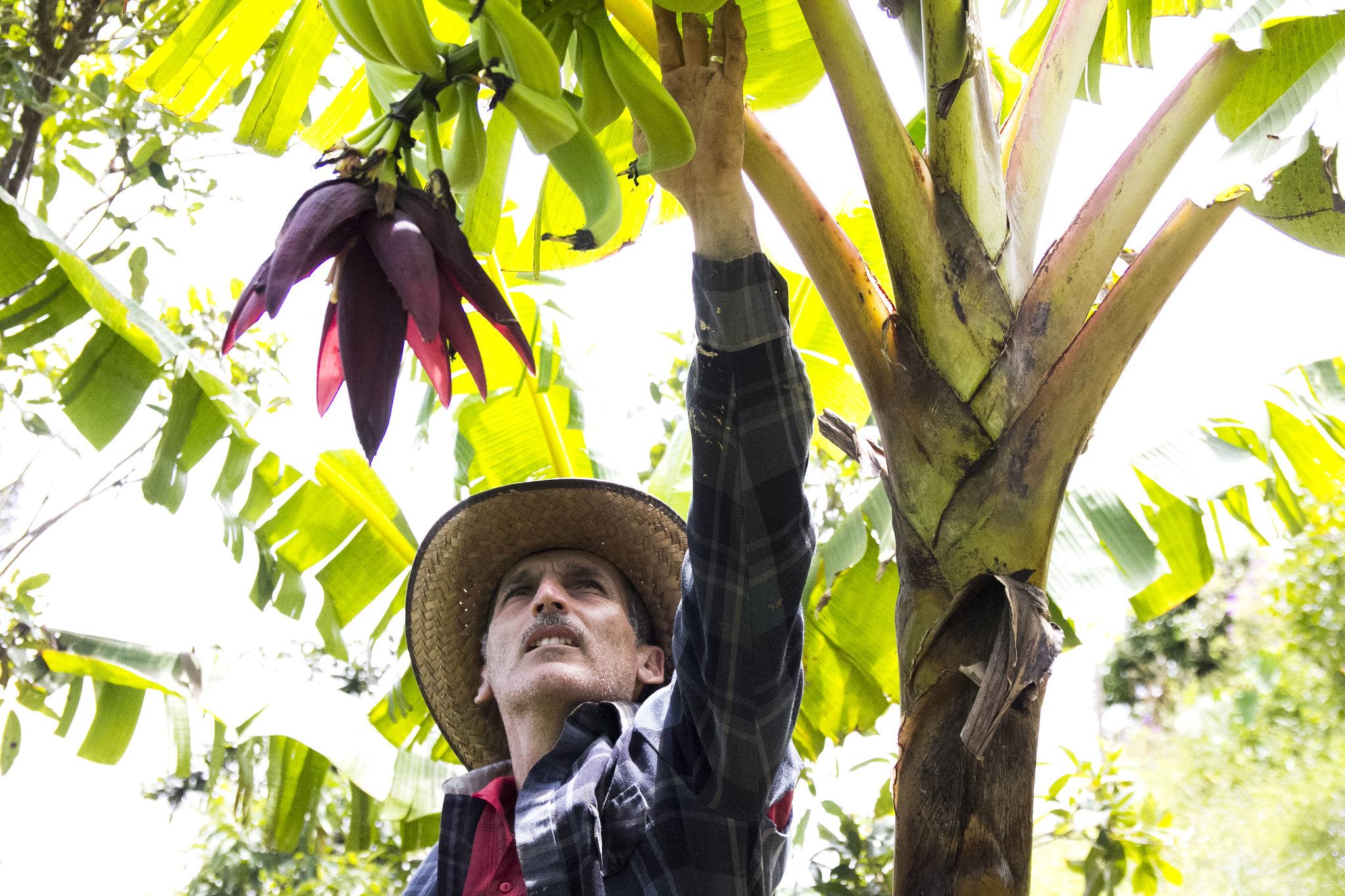 Joseline Meléndez 4. verificando el ramo