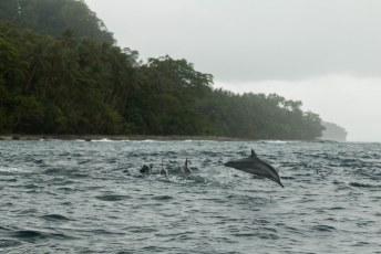Onderweg zagen we veel vliegende vissen, en vlak bij het eiland deze groep dolfijnen.