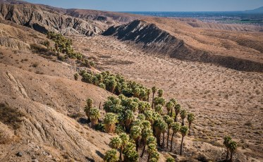 Palms Fed by Springs on San Andreas Fault