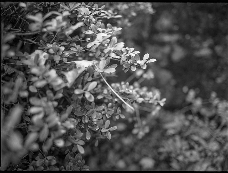 shrubbery, detail, interior, yard, Asheville, North Carolina, Mamiya 645 Pro, mamiya sekor 45mm f-2.8, 11.2.18