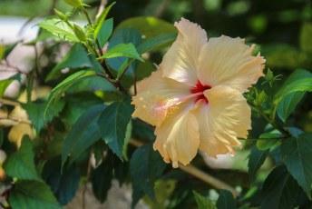 en overal tropische bloemen