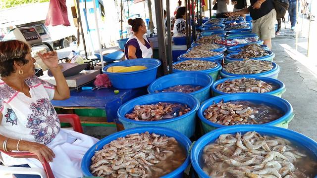 9-Changueras-Shrimp-Stacey-Wittig