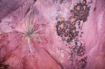 Clinging to Life - Gold Butte