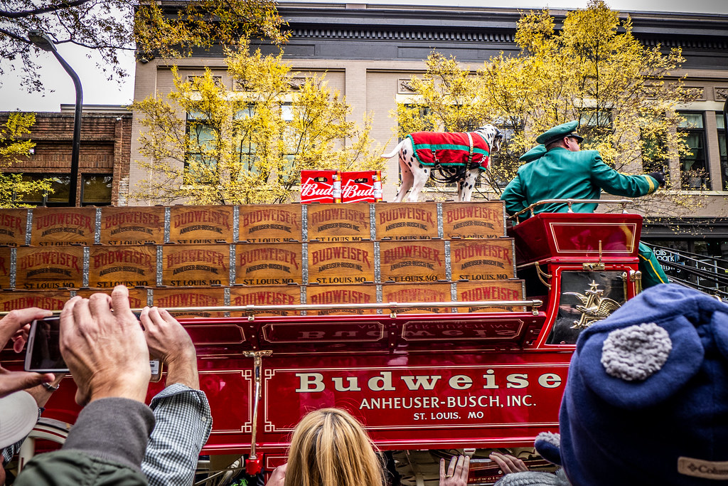 Budweiser Clydesdales come to Greenville-013