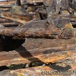 05 Viajefilos en Australia, Fraser Island 019