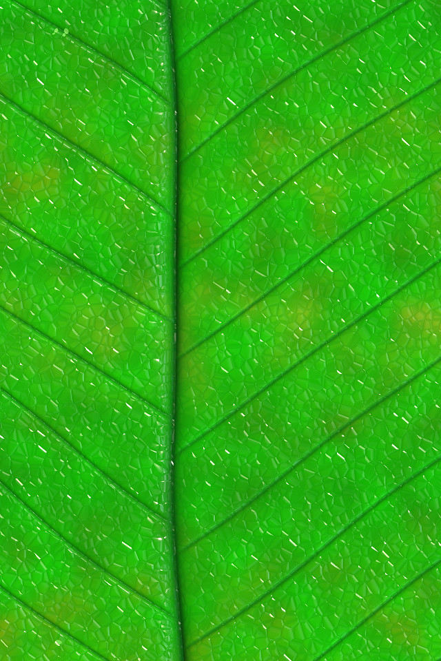 Get Live Wallpaper For Iphone Green Leaf Iphone Background Show Your Digital Green