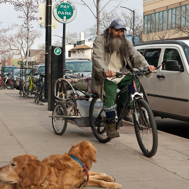 Homeless and Goldens