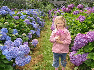 Nina with purple hydrangeas