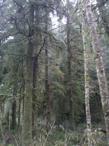 Tillamook State Forest