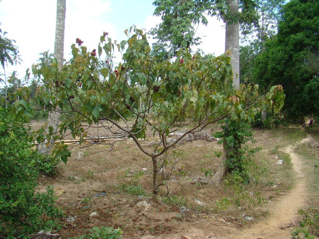 ruta plantaciones especias Zanzibar Tanzania 08