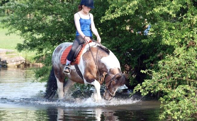 How smart are horses? - Quora