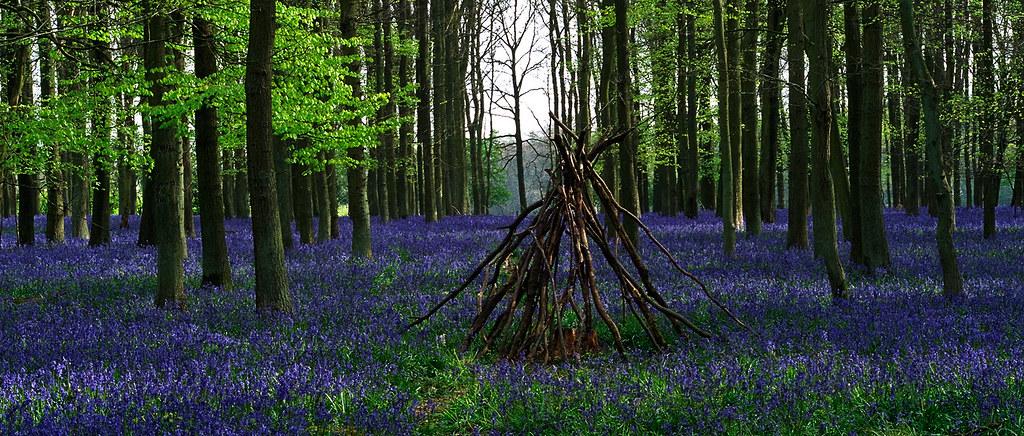 Motivational Wallpapers Hd Ashridge Park Hertfordshire Uk National Trust Woodland