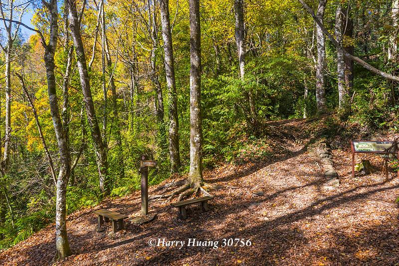 Harry_30756,霞喀羅國家步道,霞喀羅古道,國家步道,古道,步道,楓葉,楓樹,楓紅,秋季,秋天,新竹縣,尖石… | Flickr
