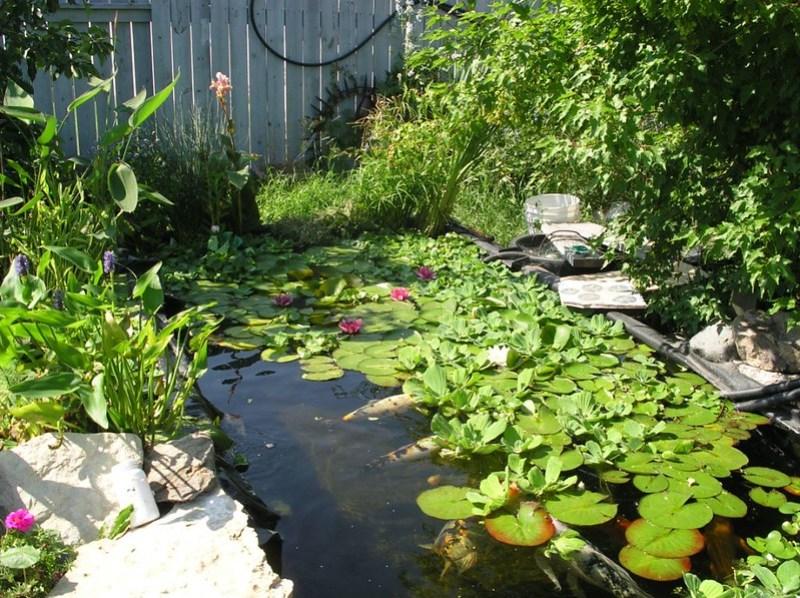 backyard-pond-landscape