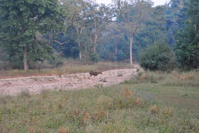 Here's the Guide to Rajaji National Park for Your Next Jungle Safari