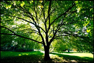 Trees are Beautiful