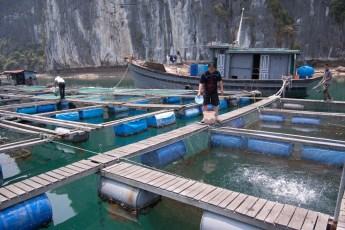 Besuch Pangasius Fischzucht 34