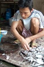 Besuch Pangasius Fischzucht 15