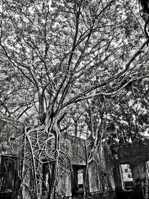 Paricatuba ruins - Amazonas - Brazil