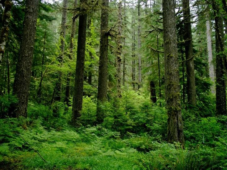 Slow - Coastal Temperate Rainforest