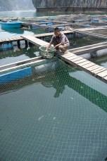 Besuch Pangasius Fischzucht 25