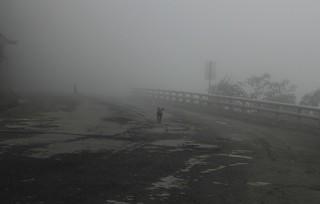 foggy mountain, creepy dogs