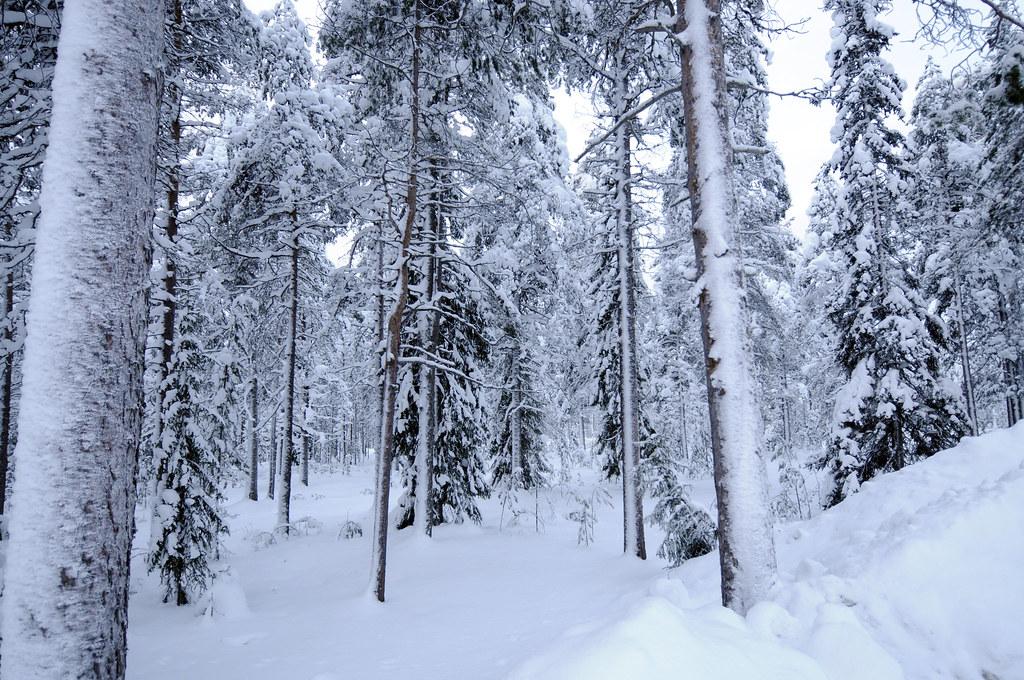 Alaska, canada, scandinavia, and siberia have taigas. Taiga Forests Are Surrounding Rovaniemi Finland In Rovani Flickr