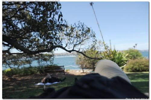 20131120_113212_澳大利亞 | 烈日當空。很多人躺在樹蔭下睡午覺。我們也躺了下來。海風徐來。根本就不想再走 ...