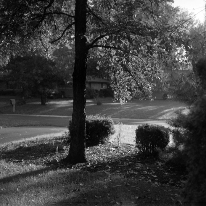 Early morning front yard