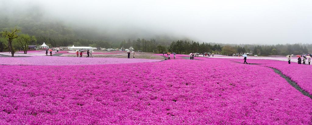 2013.0511.1142.04 | 日本 / 山梨縣 / 河口湖町 / 本棲 / 富士芝櫻祭 ...