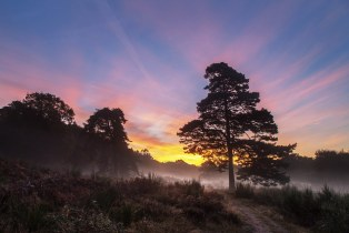 Sonnenaufgang in der Wahner Heide