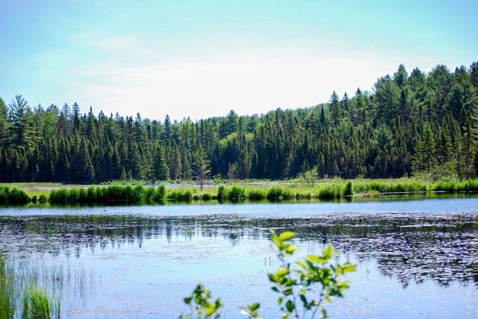 Beaver Pond Trail, Algonquin Park, Canada
