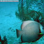 Side Angel Culebra, PR Beaches Diving