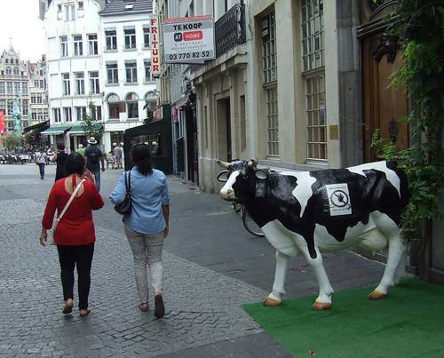 Antwerp street cow