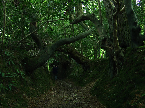 mossy tunnel 2