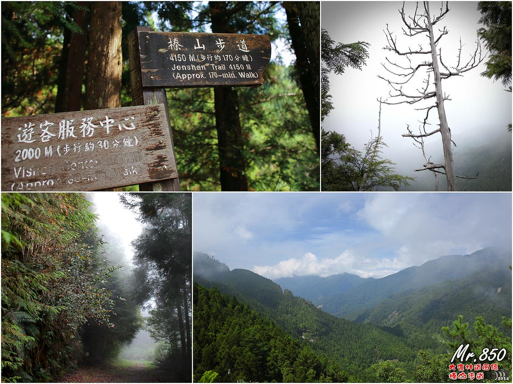 觀霧榛山森林浴 (20140913) | Flickr