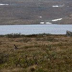 10 viajefilos en Noruega, Hardangervidda 21