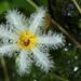 botanischer garten basel-5488.jpg
