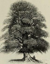 "Of ""trees Long Island"" 1902"