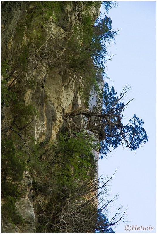 bomen aan de rotswand (7D031493)