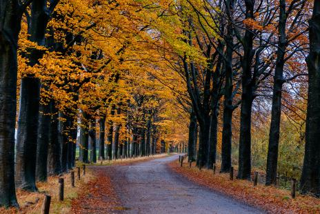 The late Autumn road on a rainy day