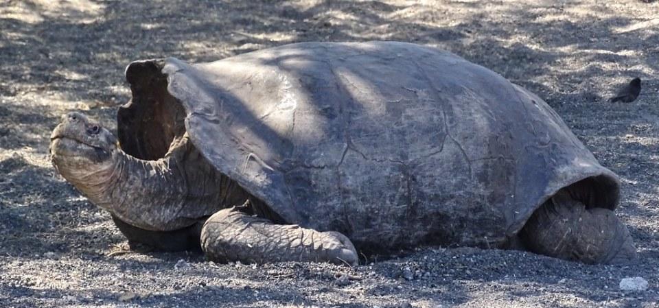 Centro Crianza Tortugas Gigantes Arnaldo Tupiza Chamaiday Isla Isabela Ecuador 06