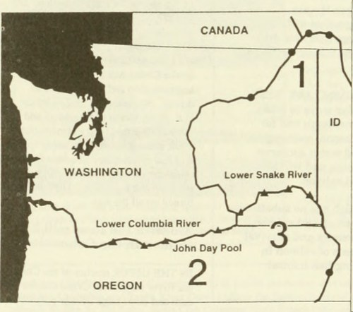 small resolution of  image from page 213 of columbia river basin fish and wildlife program salmon