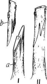 Artificial vegetative propagation  -Whip Grafting-Educatelink.com