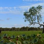 02 Viajefilos en Australia, Kakadu NP 056