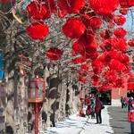 CHINA-2011_0472
