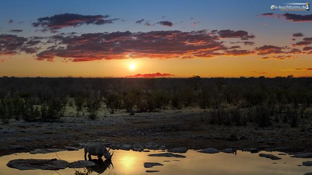 Black rhino under african sun
