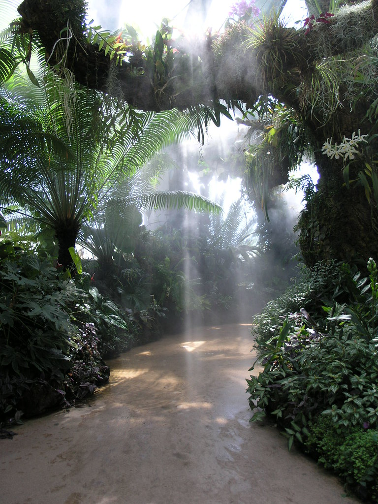 Free Hd Wallpapers Garden Mist This Is The Tropical Section Of The Denver