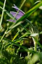 Hidden in the grass
